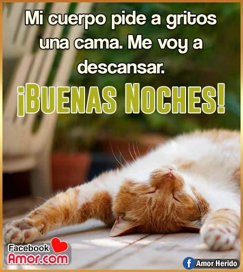 imagen de gato buenas noches gracioso