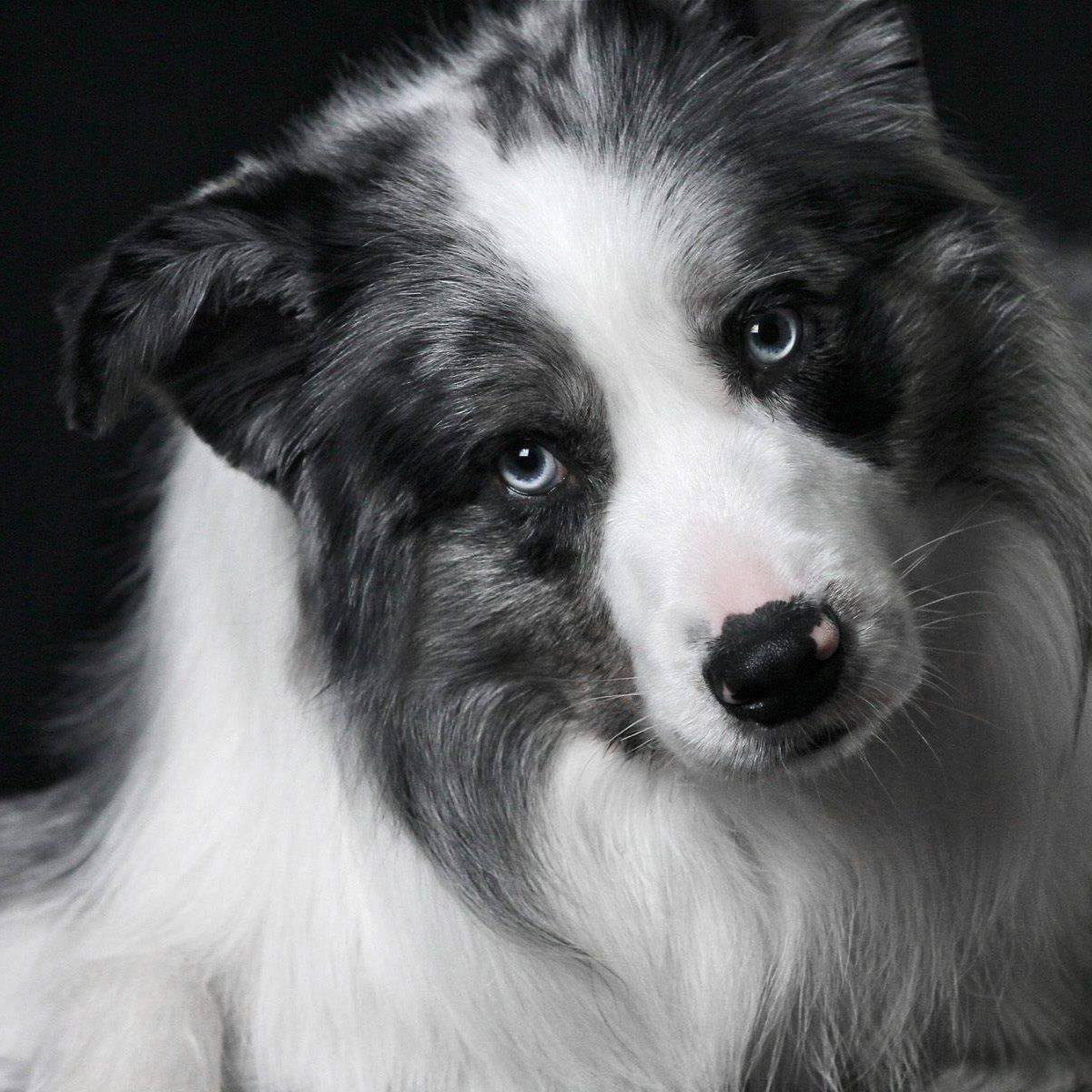 The Modern Bark   Dog Training Tips: May 2013