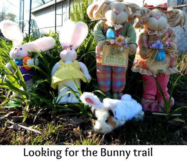 The #Easter, #GuineaPig -CarmaPoodale.com
