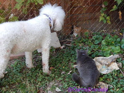 Carma Poodale talking to cat