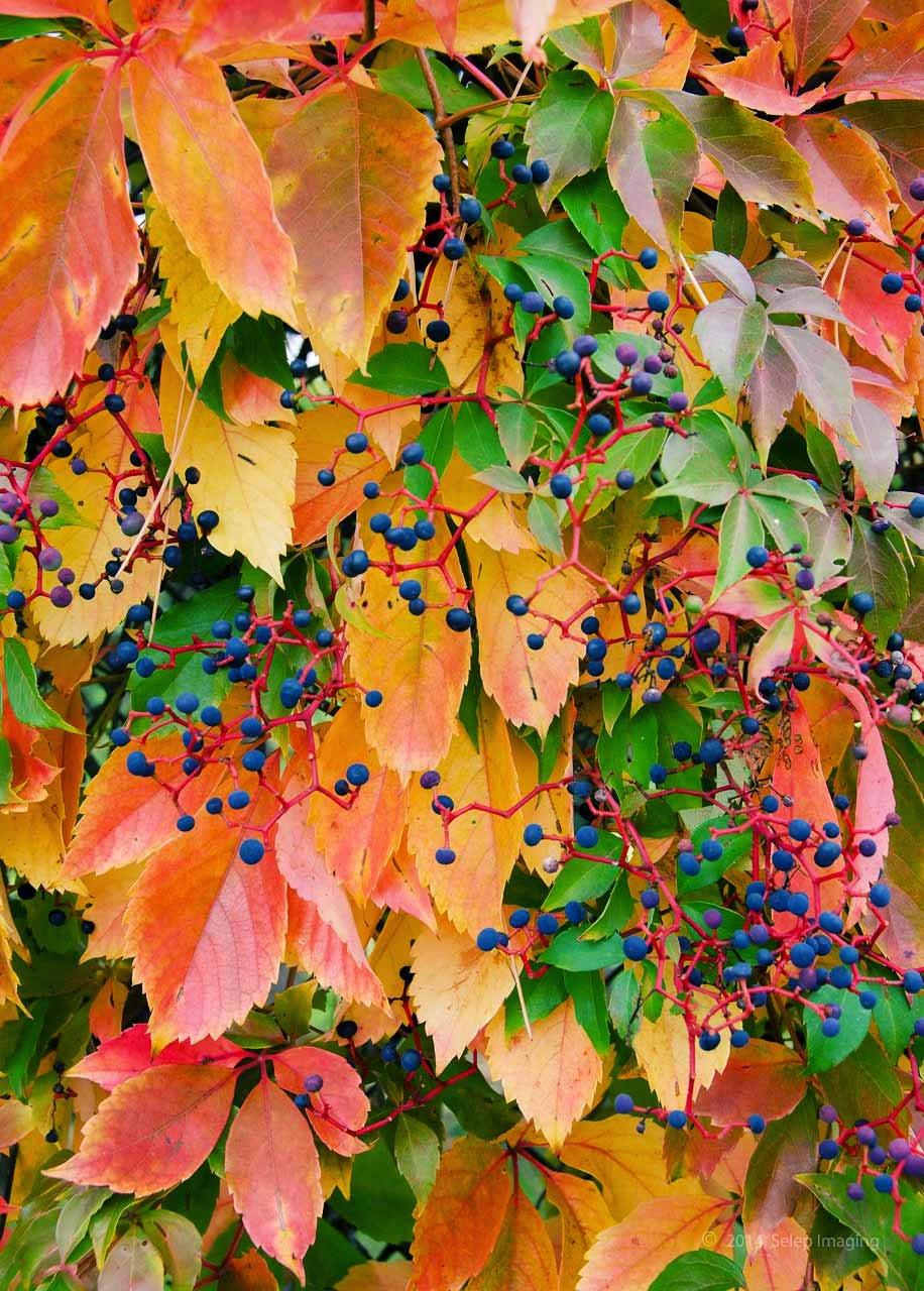 fall foliage by Jeanne Selep