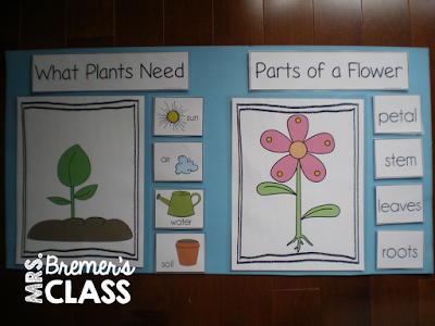Learning about the plant life cycle in Kindergarten- perfect as a spring theme!