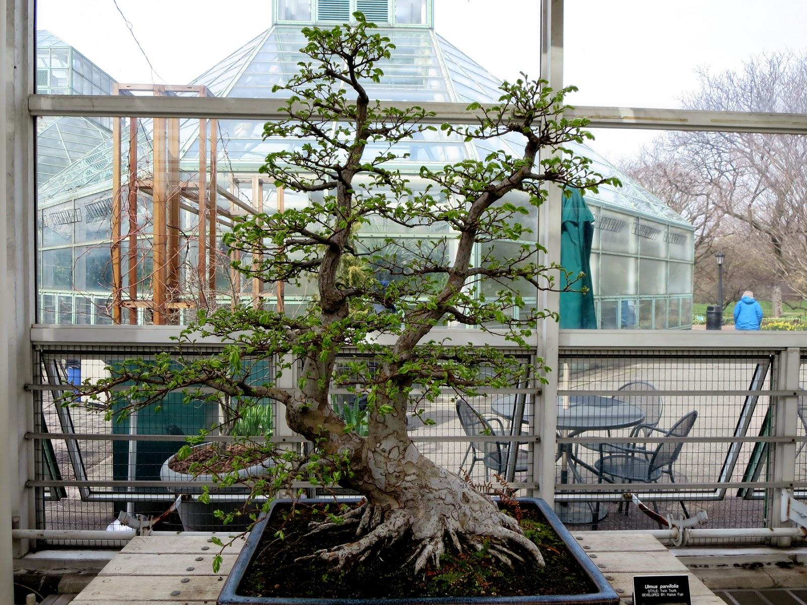 Big Apple Secrets Bonsai Collection In Brooklyn Botanic Garden