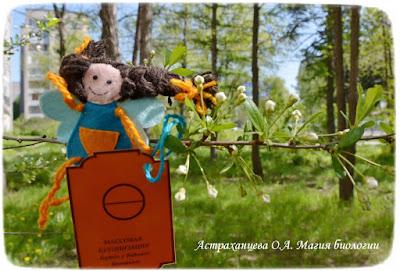 фенофазы, феечка, наблюдения весны, бутоны вишни, карточка,пальчиковый театр