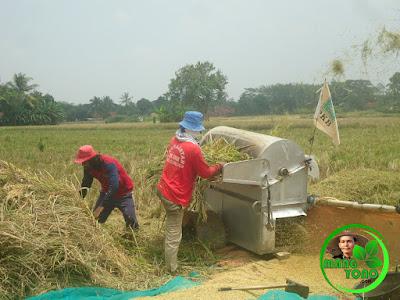 Perontokan padi menggunakan mesin