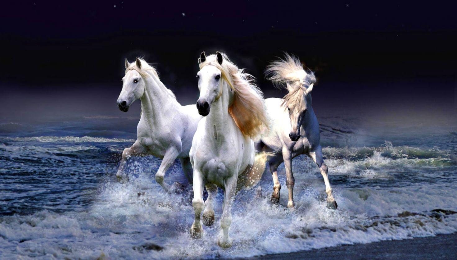 Running Horses Wallpaper Hd Wallpapers Legend