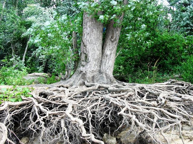 Erozyonun Etkileri, Sonuçları, Tehlikeleri Nelerdir
