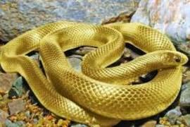 Leyenda de la anaconda dorada