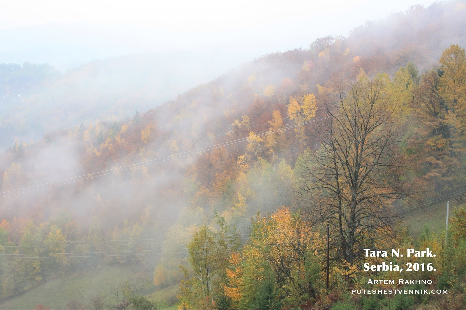 Осенний лес в тумане