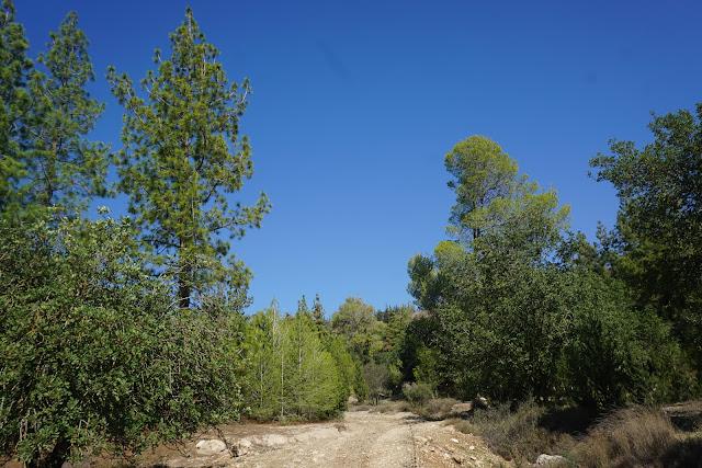 עין מסילה - יער אשתאול