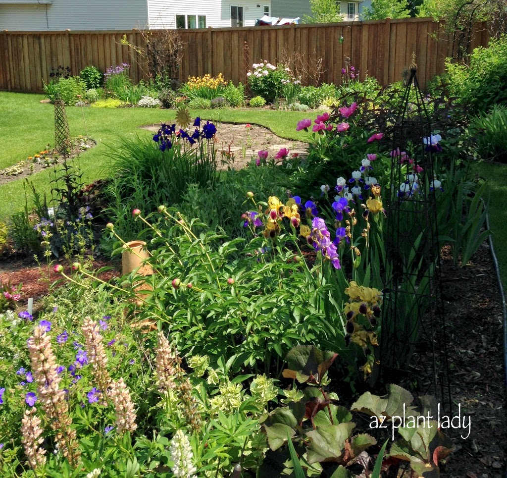 RAMBLINGS FROM A DESERT GARDEN....: Colorful Midwestern ...