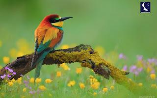 Rüyada kuş