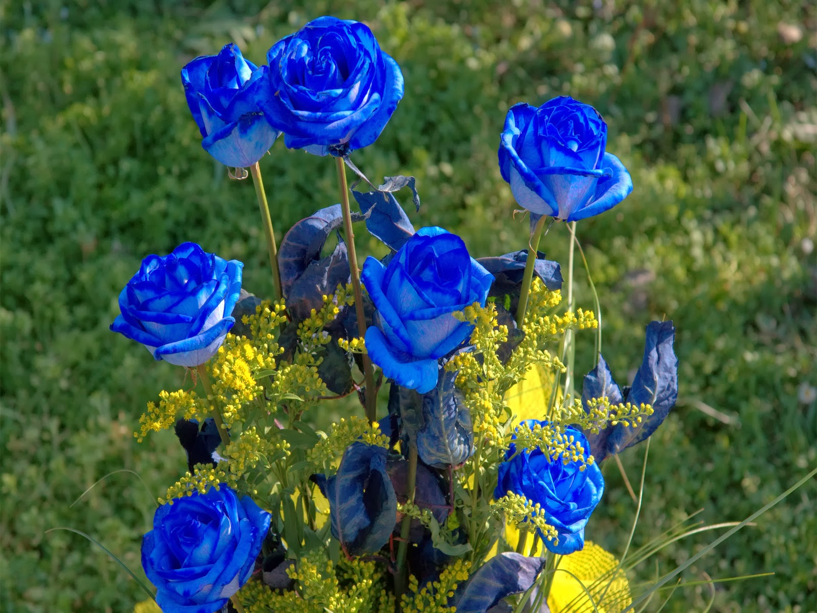 photo gallery : blue rose ~ hd flower wallpaperphoto gallery