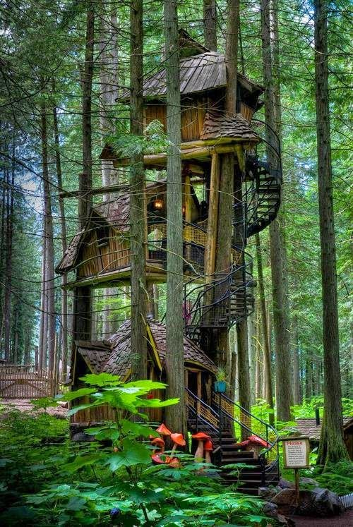 casa del árbol, tree house