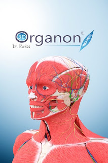 Download 3D Organon Anatomy