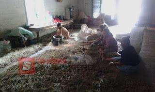 Pasca Panen, Ibu-ibu di Temayang Sortir Bawang Merah