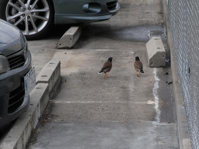 Tokyo Bird Song