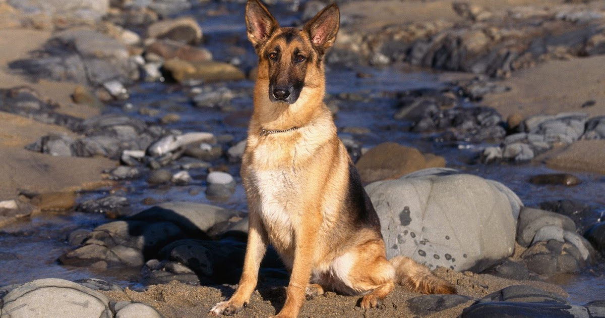 Dog Wallpapers Entertainment Only