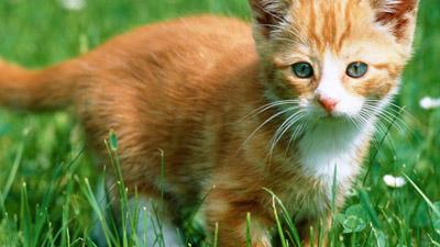 Siskoid S Blog Of Geekery Cat Of The Geek 111 Milo
