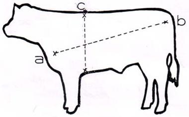 Tag: cara mengukur tinggi badan yang mudah