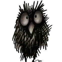 funny owls, owls,