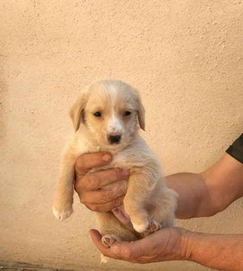 cachorro talla pequeña