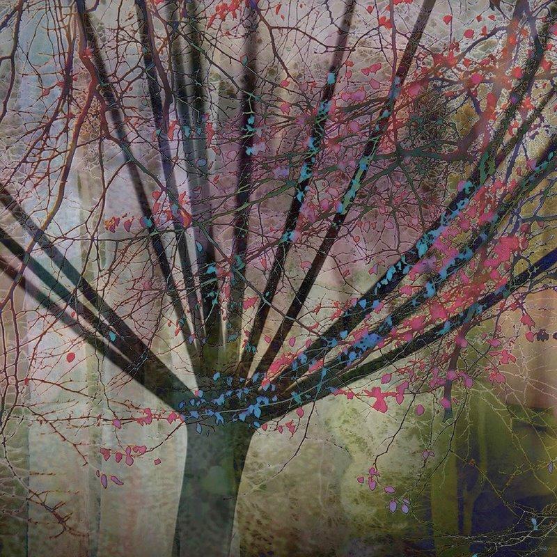 IGPOTY N. 11. Premios concurso fotografía plantas. Linda Duncalf • Segundo premio • 'Seedhead Tree'