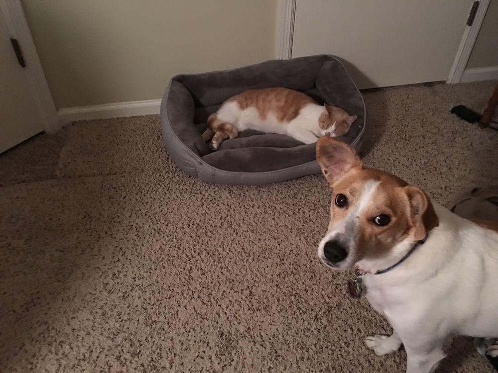 Resultado de imagen para gatos roban cama perros