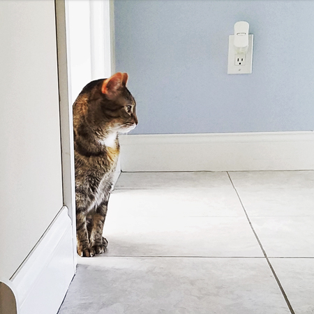 image of Sophie the Torbie Cat sitting in a doorway in profile