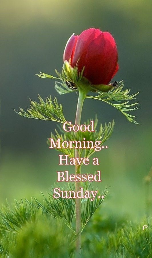 happy blessed sunday images