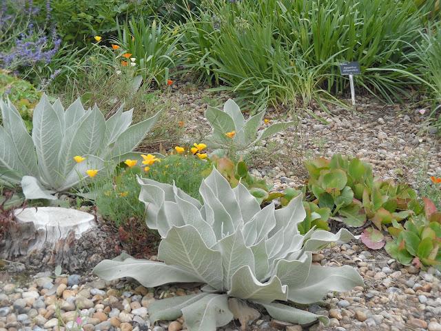 suchy ogród, żwir w ogrodzie
