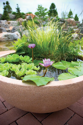 terrific water garden design with made to measure | persianfuns: Container water garden ideas