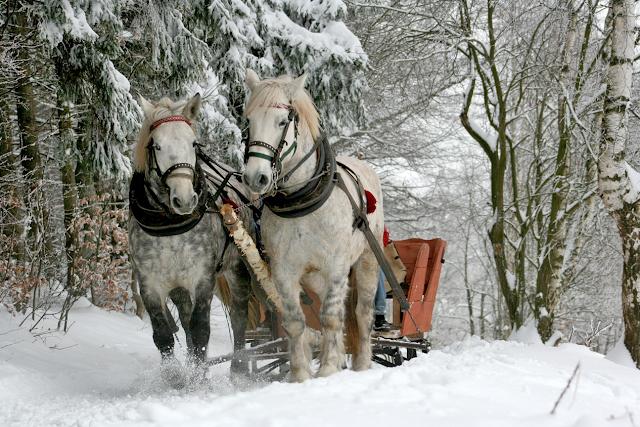 повозка с лошадьми зимой