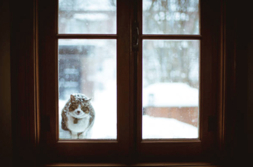 cat outside door in snow