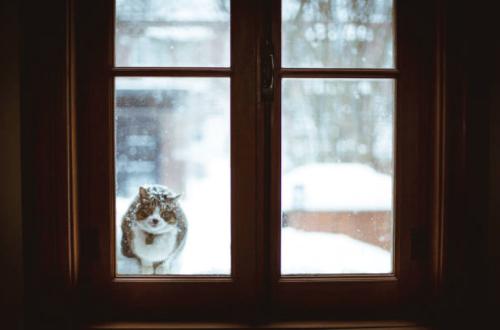 cat outside door in snow