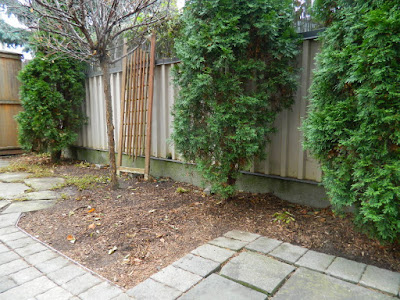 Oakwood Village Toronto Fall Backyard Cleanup by Paul Jung Gardening Services after