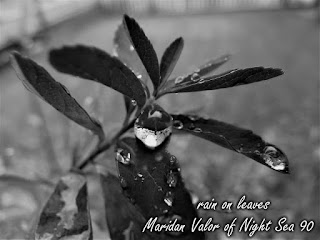 Rain On Leaves; Black And White Photography