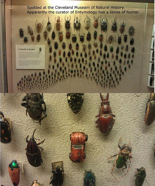 well it is a beetle