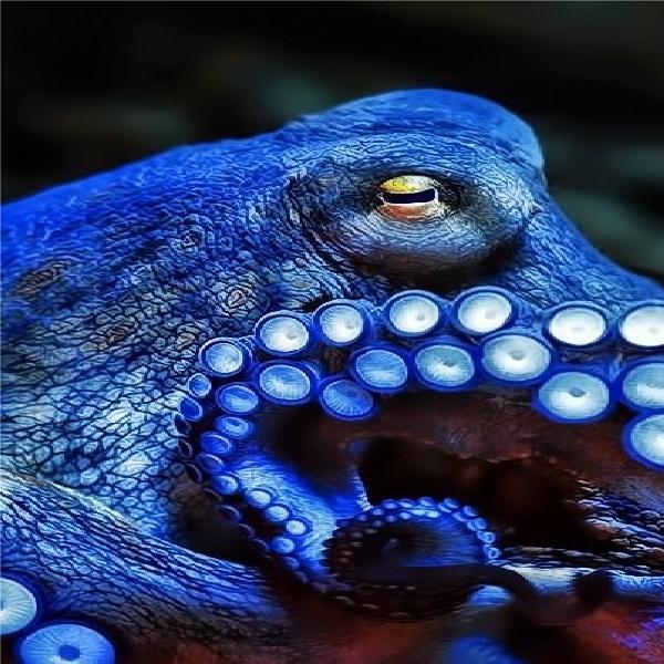 octopus photo 4