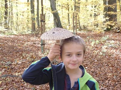 grzyby 2018, grzyby w październiku, grzyby w Lasku Wolskim, zabawy w lesie