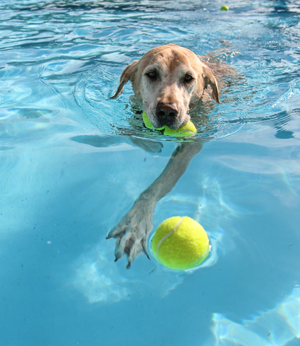 Bishop Ranch Veterinary Center Ask The Vet Summer Adventures With Swimming By Kristel Weaver
