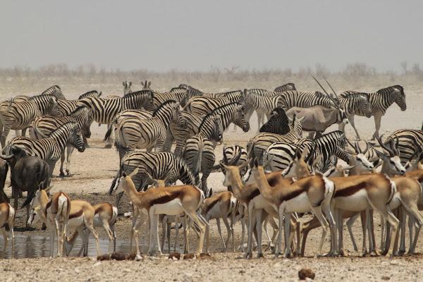 Etoscha Nationalpark (Bilder)