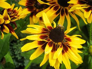 Une fleur jaune et brune