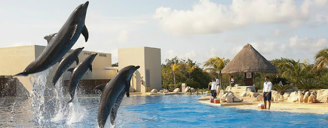 Atrações do Dolphinaris Cancún em Cancún