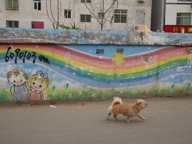 dog walking by a mural with a rainbow on a wall in Xiapu, China