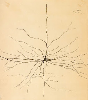 A pyramidal neuron in the cerebral cortex, a drawing by Santiago Ramon y Cajal.