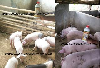 manfaat viterna plus untuk babi