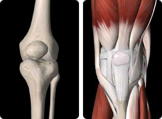 Images of left knee joint bones and with connective tissues (Patellofemoral Syndrome)