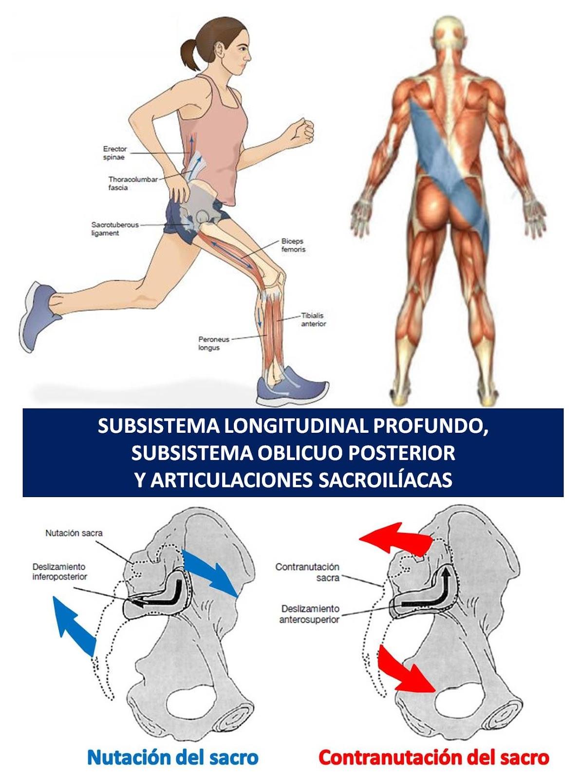 Concepto de biceps femoral