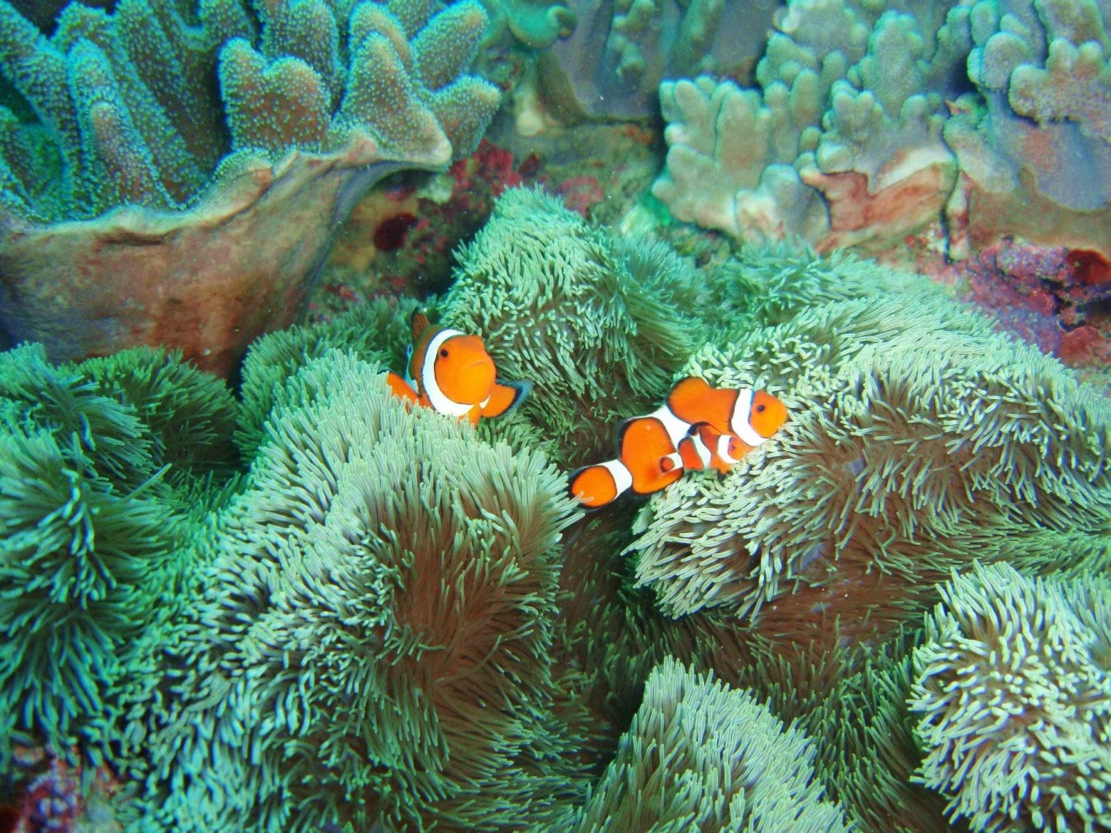 沖繩-潛水-浮潛-砂邊-推薦-Okinawa-scuba-diving-snorkeling
